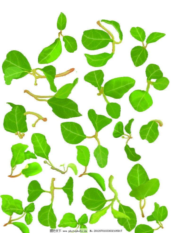 绿叶树叶叶子图片