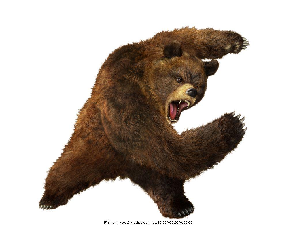 动物 熊科 1024_782