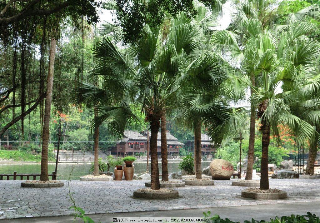 棕树泉四季歌谱