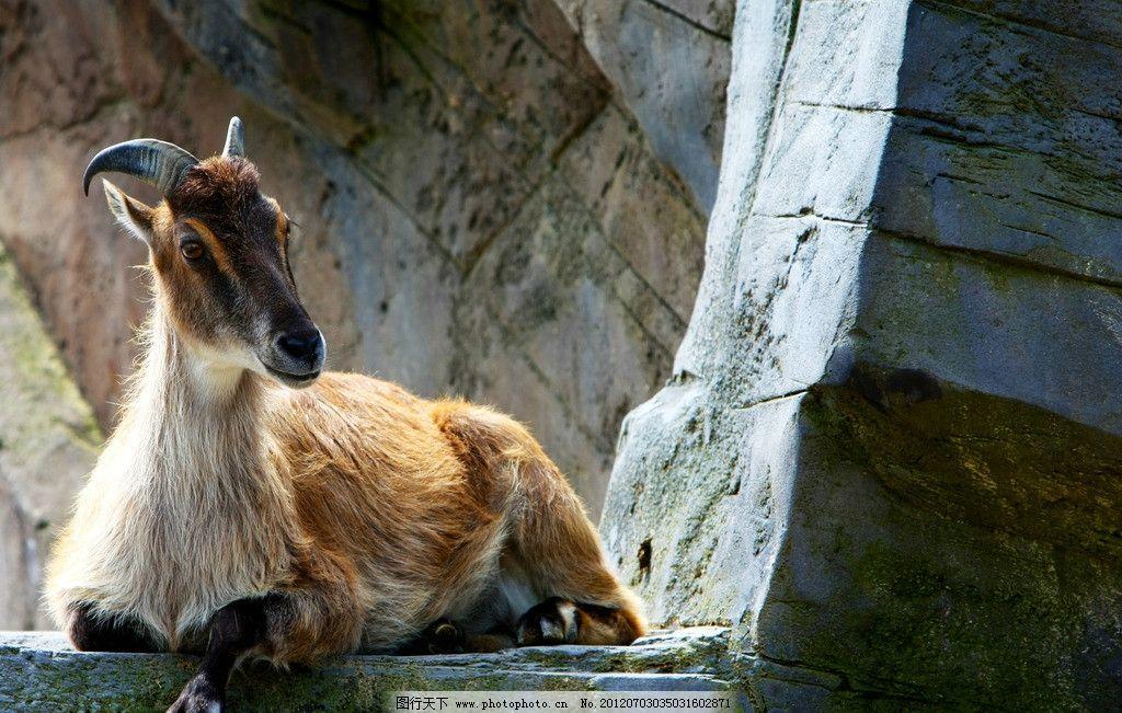 羚羊 野生动物 保护动物 雄性 犄角 生物世界 摄影 72dpi jpg