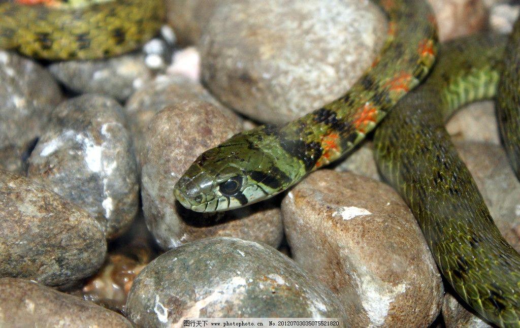 蟒蛇 动物 动物园 野生动物 爬行动物 生物世界 摄影