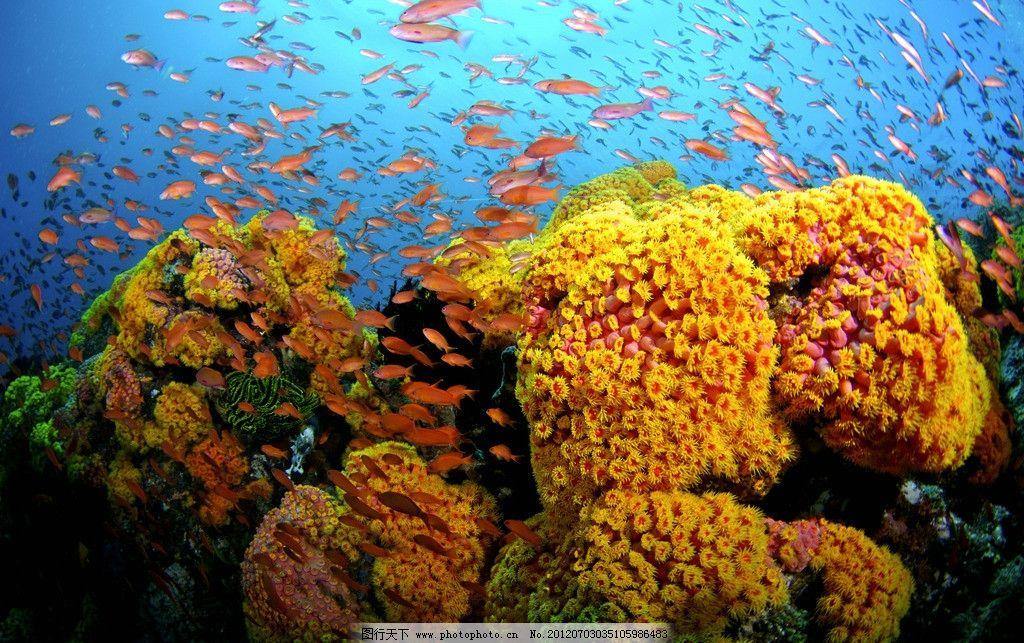 海底世界 海洋世界 海洋藻类 美丽海藻 金黄色海藻 海洋菌类 观赏藻类