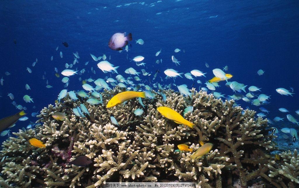 海底世界 海洋藻类 深海植被 海底植物 海底鱼群 鱼群 海洋鱼群 海洋