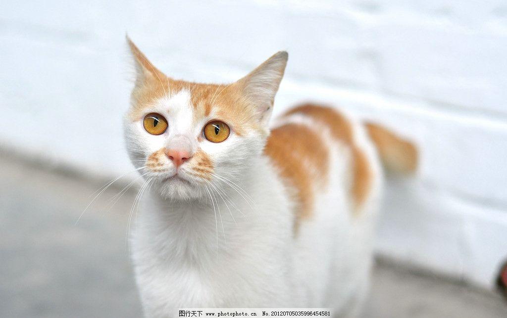 小花猫 可爱 动物 宠物