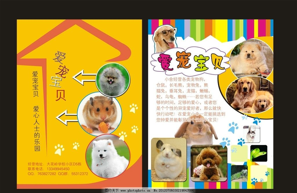 宠物宝贝 金黄 彩色 可爱 爱心人士乐园 其它系列广告 dm宣传单 广告