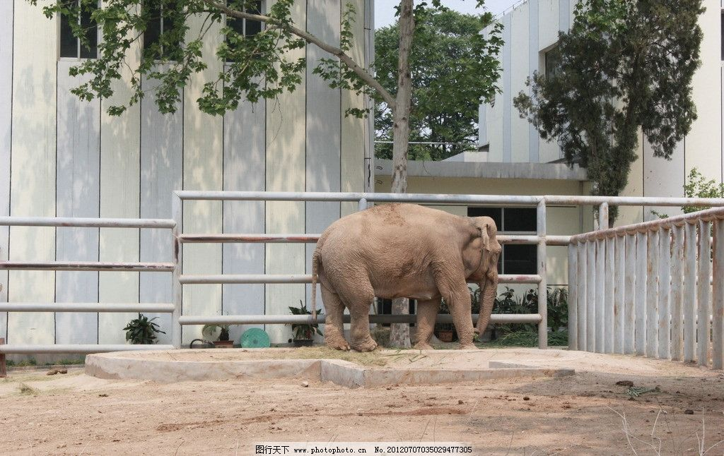 大象 动物 动物园 旅游 假期 济南动物园 高清 大图 生命 栏杆
