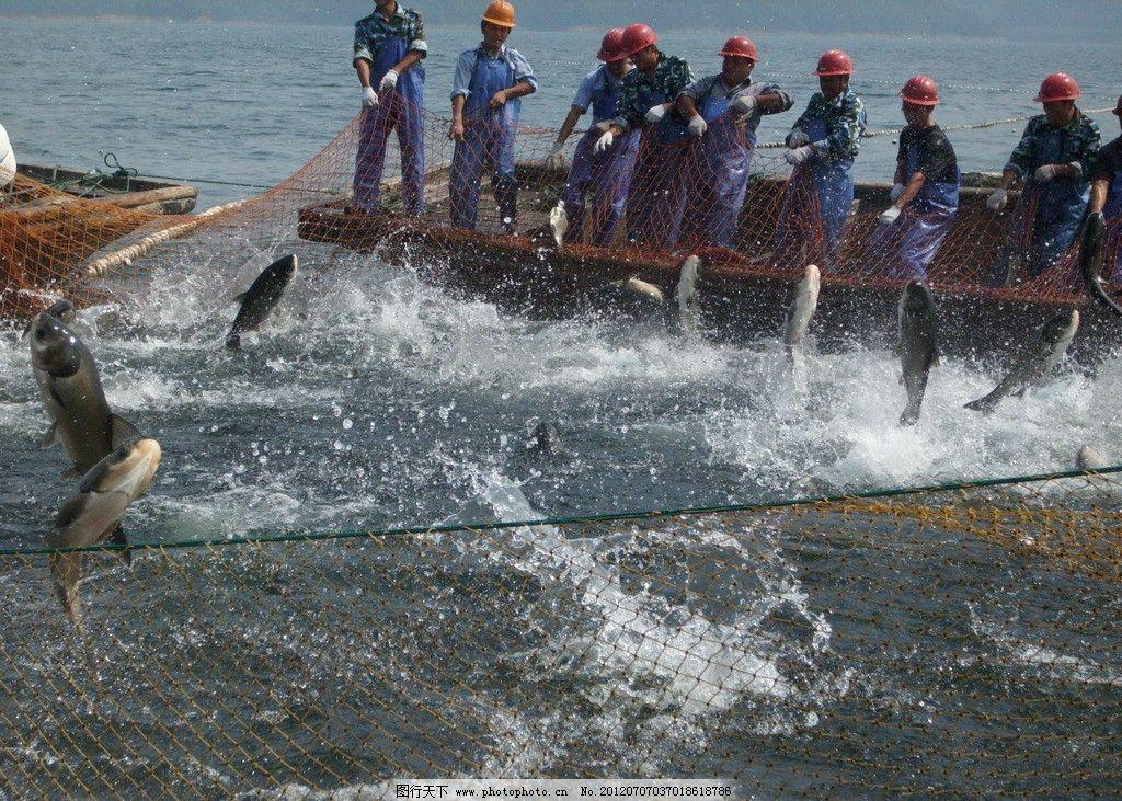 千岛湖巨网捕鱼 千岛湖 巨网捕鱼 渔民 捕捞队 生活素材 生活百科