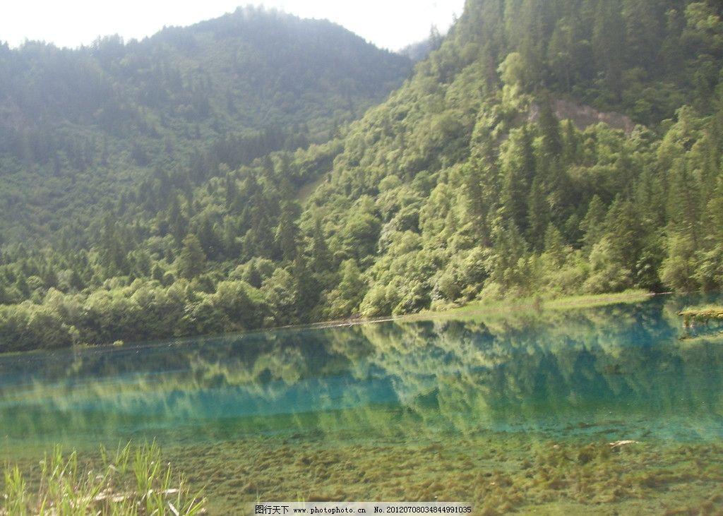 九寨沟 山水 山山水水 绿树 树木 树林 自然风景 九寨沟风景