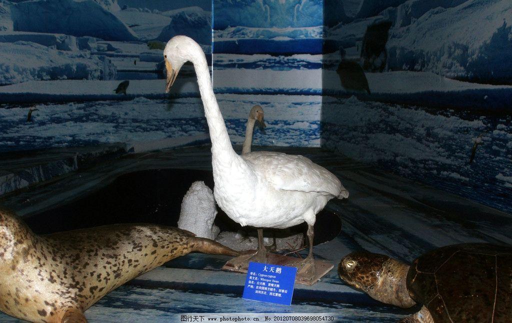 大白鹅 动物素材 鹅标本展览 海洋馆 海洋生物 珊瑚 摄影图片