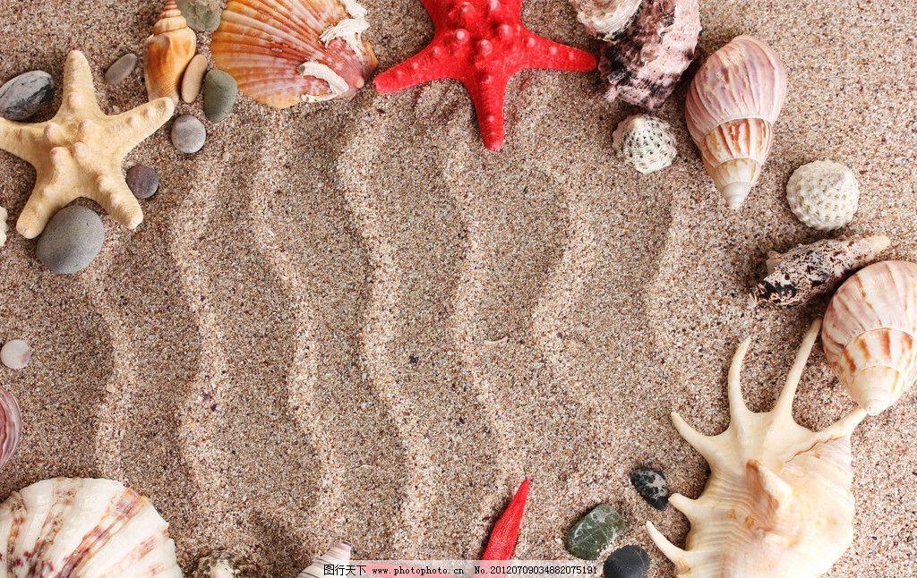 沙滩海洋生物 沙滩 海洋生物 海螺 海星 贝壳 自然风景 自然景观 摄影