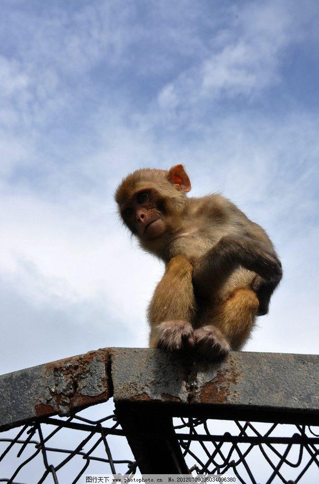 济南跑马岭野生动物园猴子图片