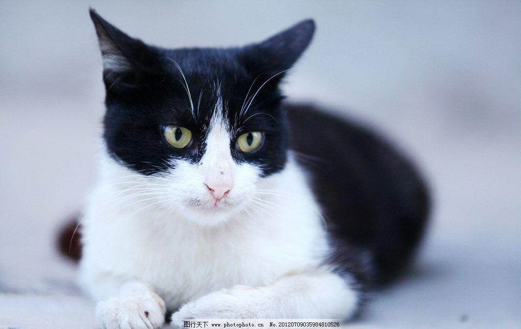 黑白野猫 野猫 猫咪 黑白 可爱的动物 家禽家畜 生物世界 摄影 72dpi