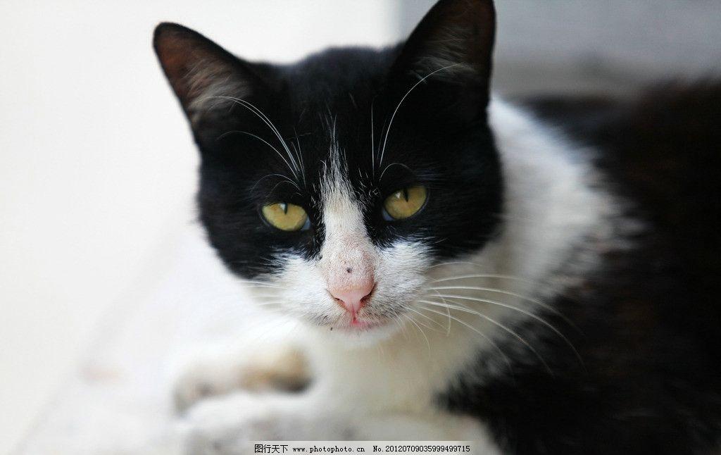 野猫 猫咪 黑白猫 小猫 可爱的动物 家禽家畜 生物世界 摄影 72dpi jp