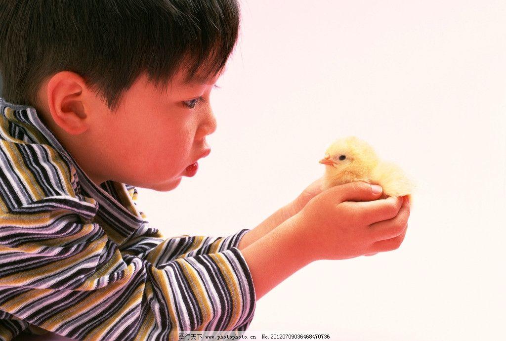爱护小动物 小孩 小鸡 生态 环保 儿童幼儿 人物图库 摄影