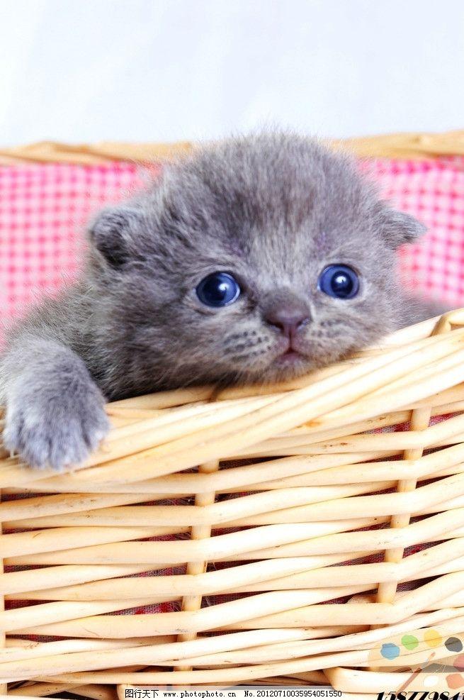 小猫 动物 野生动物 可爱 家禽家畜 生物世界 摄影 72dpi jpg
