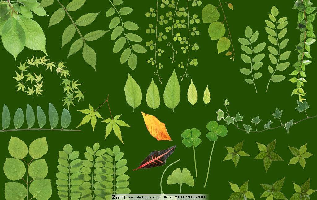 四叶草 绿色边框 树条 枫叶 树枝 枝条 银杏叶 叶子 藤蔓 绿色 边框
