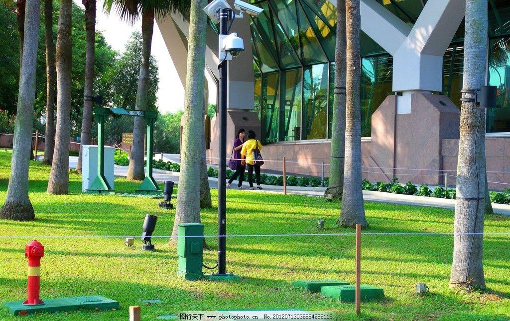 公园草地 公园 草地 阳光 热带植物 椰子树 新加坡风景 园林建筑 建筑