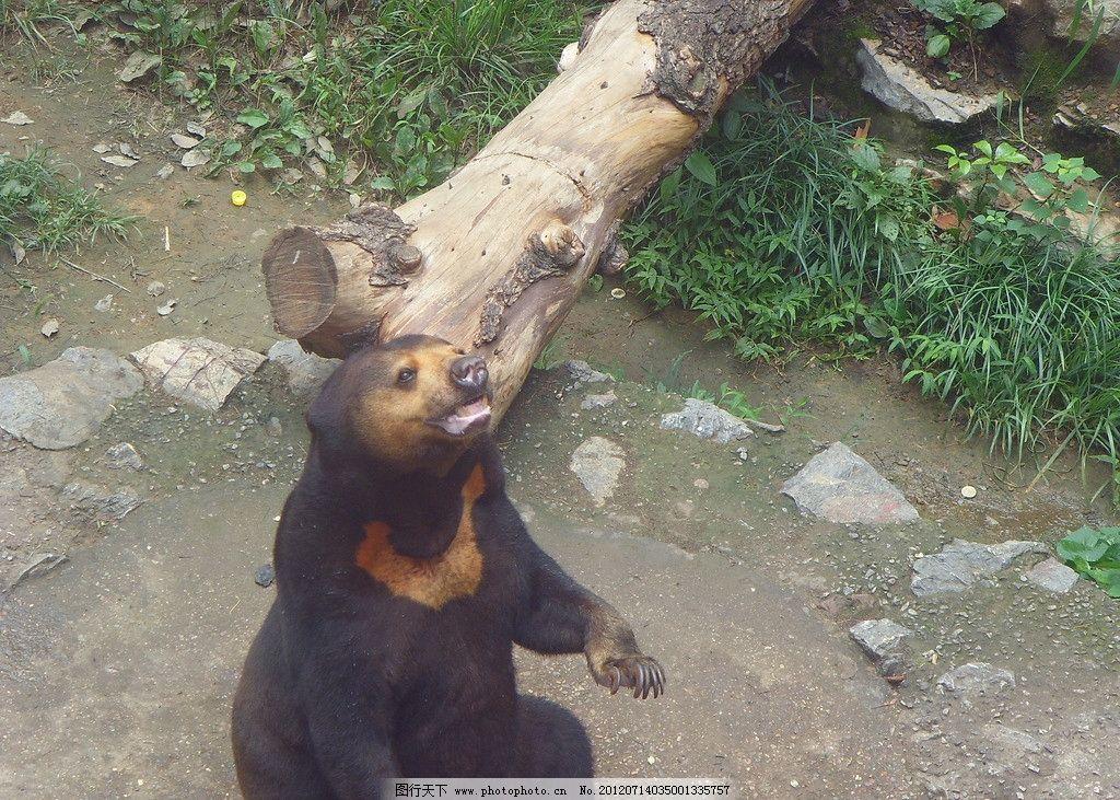 野生野生森林动物图片