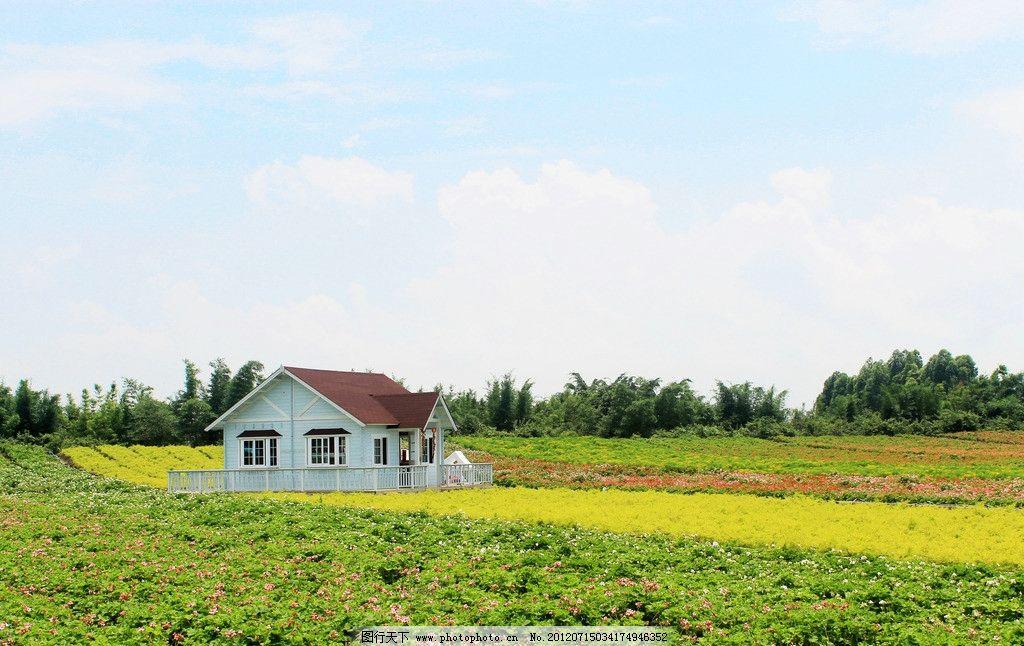 花海景观图片