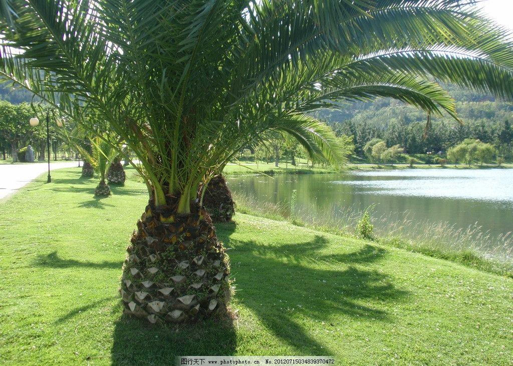 铁树光影 铁树 光影 草地 湖水 青山 自然风景 自然景观 摄影 314dpi