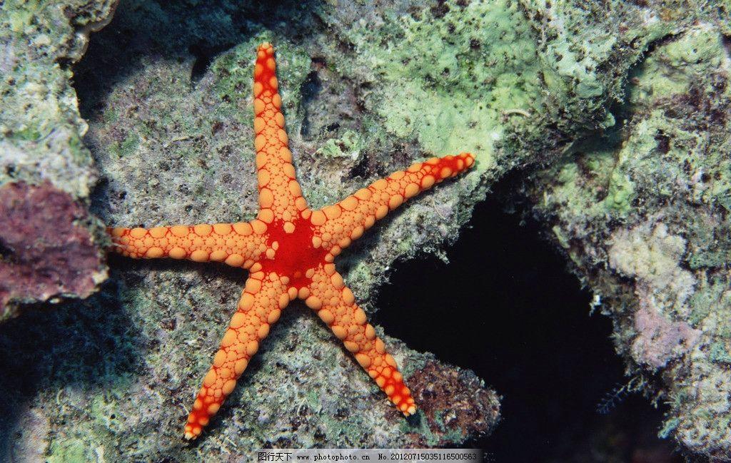 深海海星 海星 黄色海星 海洋藻类 热带海藻 观赏藻特写 观赏藻 海底