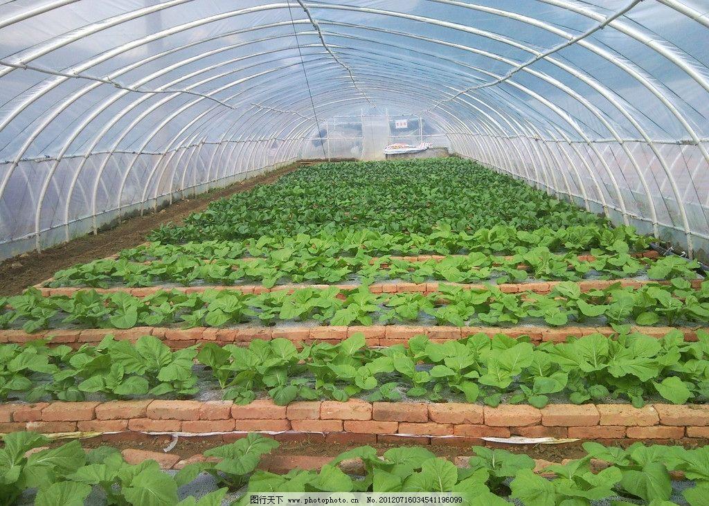 壁纸 成片种植 风景 植物 种植基地 桌面 1024_731