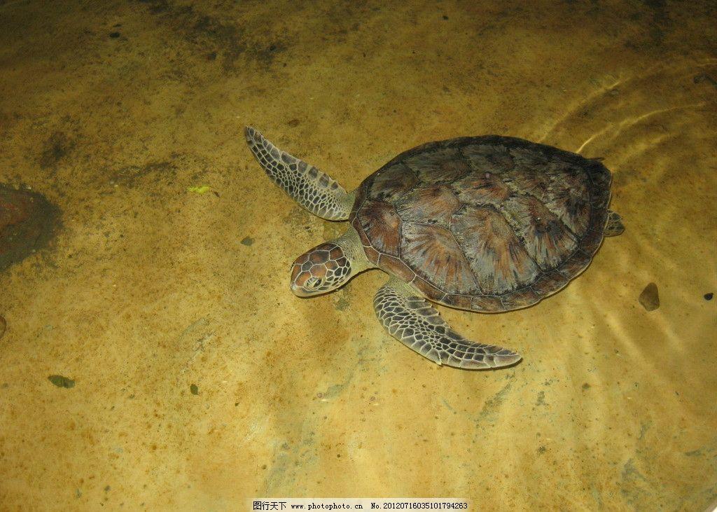 海龟 海洋生物 生物世界 摄影 180dpi jpg