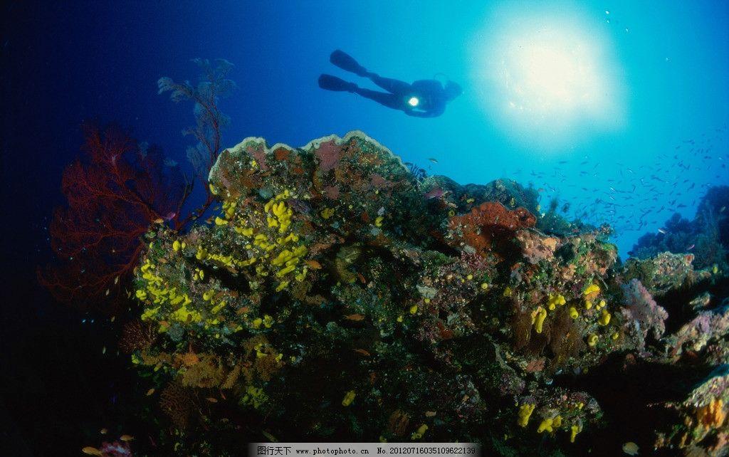 壁纸 海底 海底世界 海洋馆 水草 水生植物 水族馆 1024_642