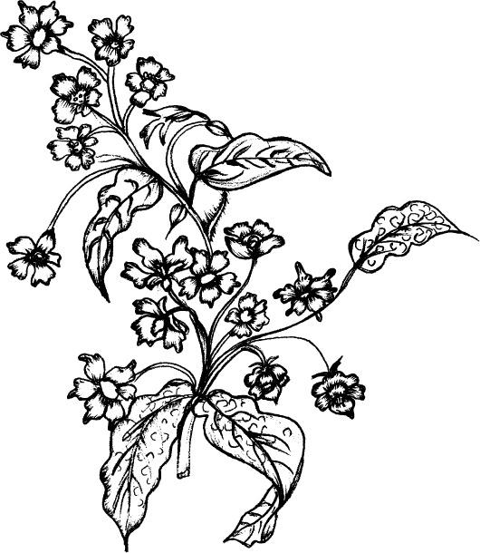 花卉植物线描免费下载 花朵 花卉 矢量素材 线描 植物 植物 花卉 花朵