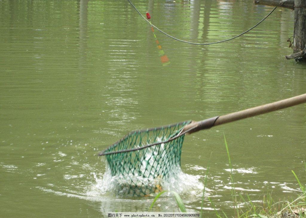 捞鱼 钓鱼 小河 河水 活鱼 鲫鱼 大鱼 水中鱼 钓鱼