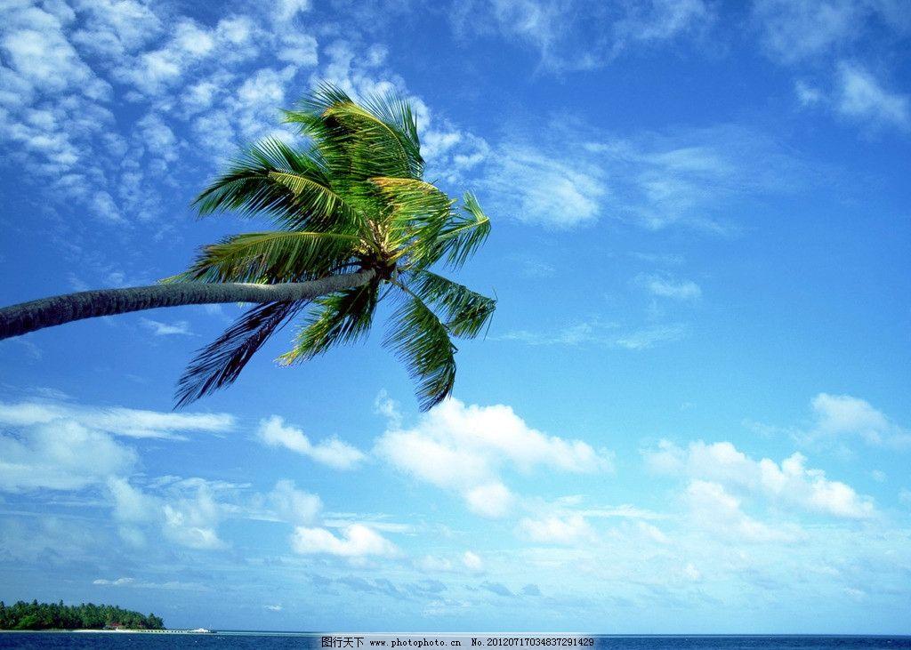 大海椰树 夏威夷 海岛 蓝天 白云 自然风光 夏日 摄影