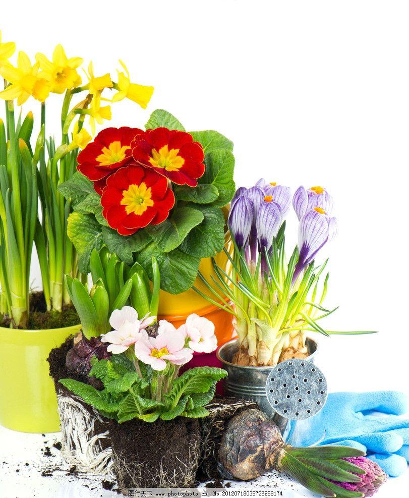盆栽植物图片
