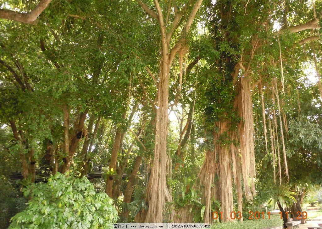 亚热带植物图片