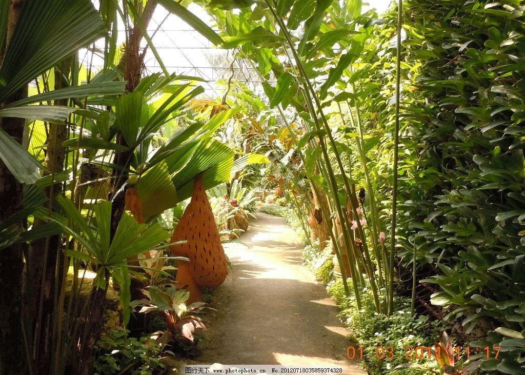 热带植物 森林 原始森林 树 树叶 树林 热带雨林 热带植物园 植物园 林木 棕榈树 绿色 藤蔓 环保 树木树叶 热带丛林 生态园林 亚热带森林 泰国植物园 泰国植物 泰国 大叶植物 生物世界 摄影 300DPI JPG