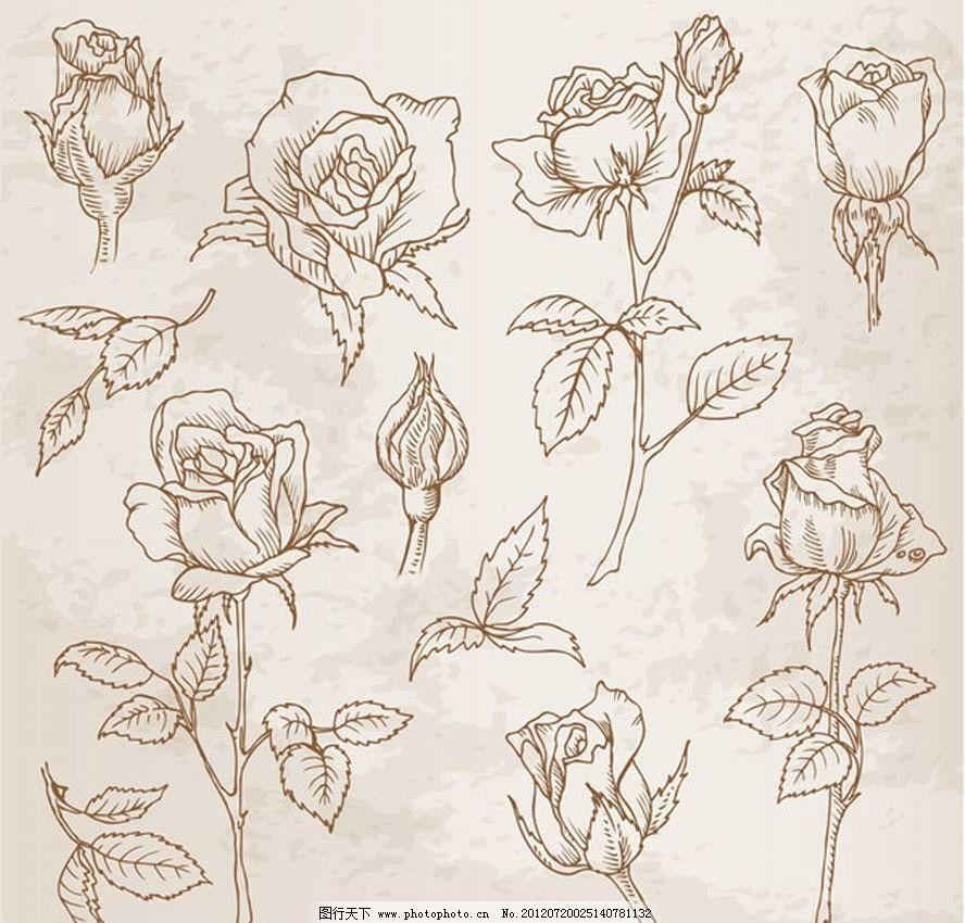 简单手绘玫瑰铅笔画步骤