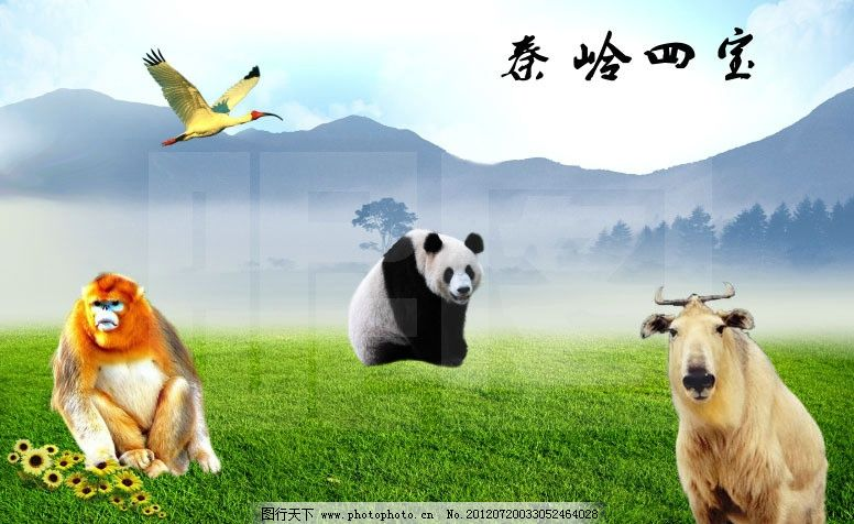 秦岭四宝 秦岭风光 朱鹮 金丝猴 大熊猫 羚牛 秦岭野生动物 设计类