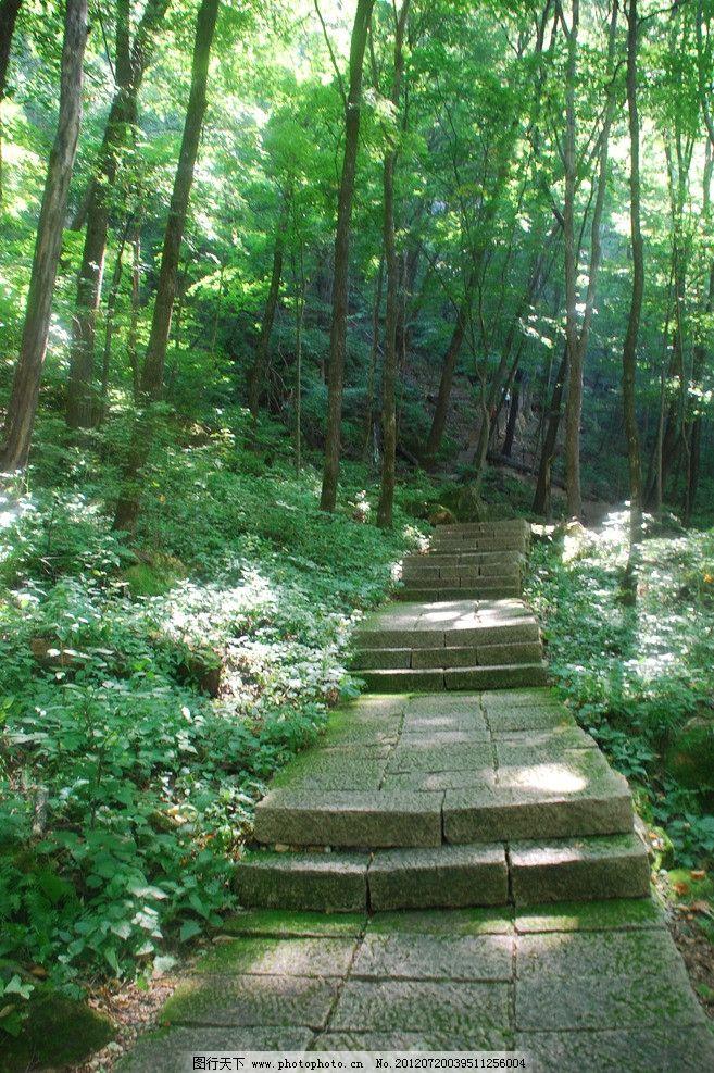 林间台阶 青苔 树木 森林 林木 园林建筑 建筑园林 摄影
