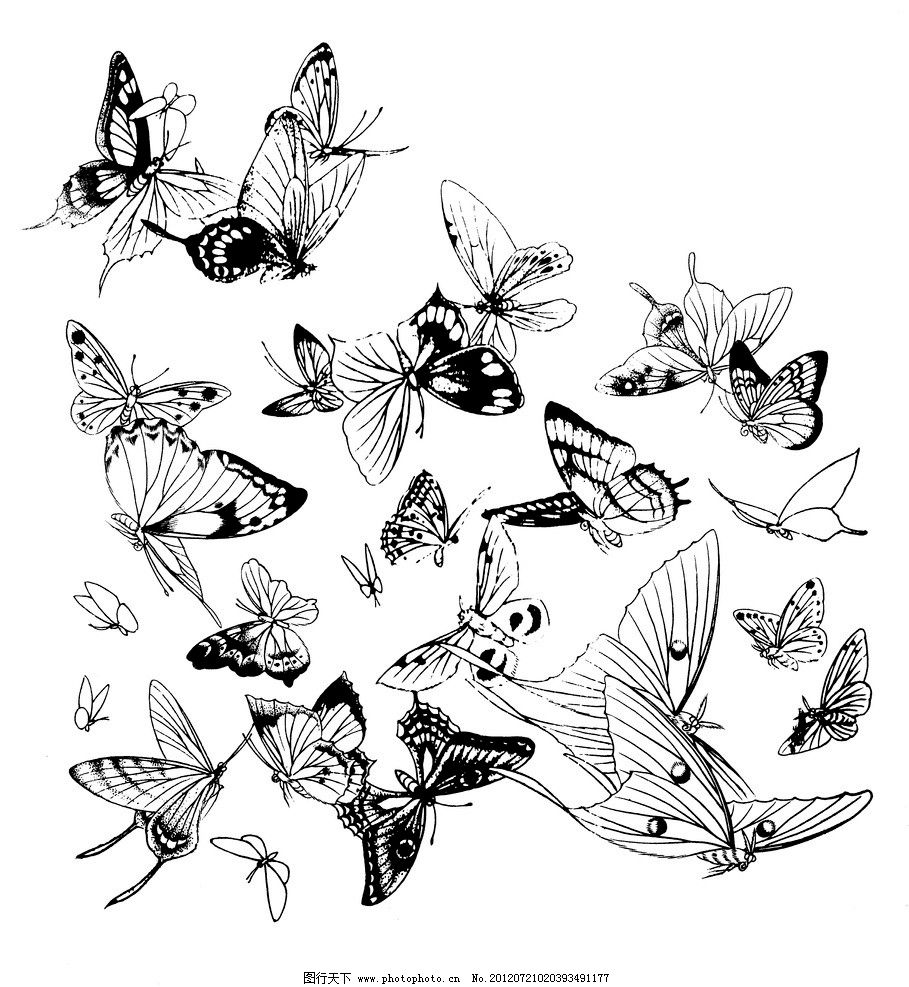 蝴蝶 线描 白描 手绘 黑白