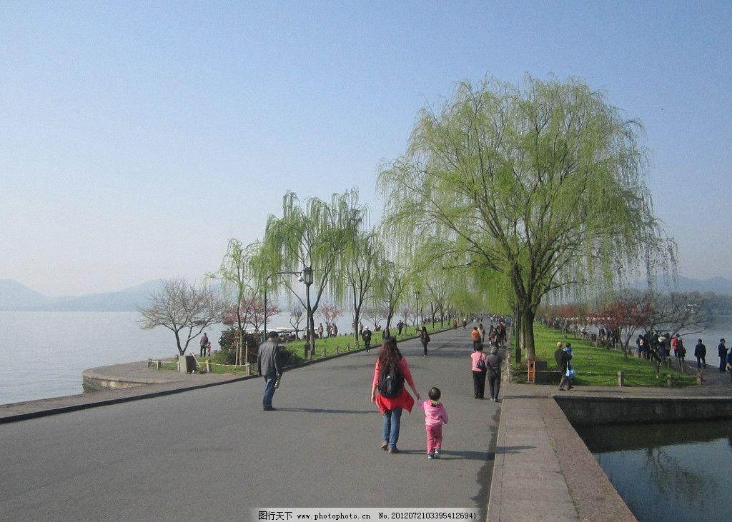 杭州西湖风景秀丽 杭州西湖 杭州 西湖 柳树 山水风景 自然景观 摄影