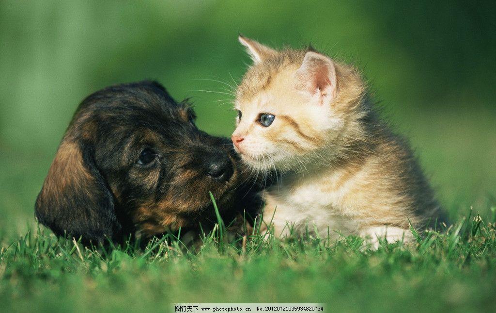 小狗与小猫 宠物狗 宠物猫 小黑狗 小花猫 小狗吻小猫 猫咪 咪星