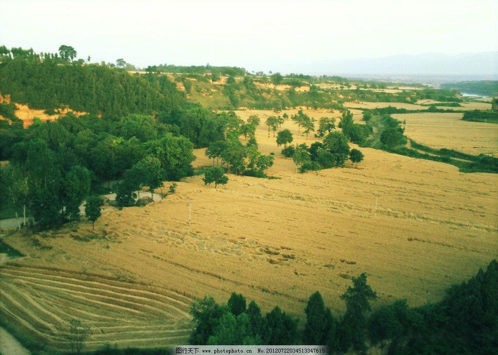 田野 麦田 收割 远翘 远景 摄影 俯视 一望无际 郁郁葱葱 树林 山顶上