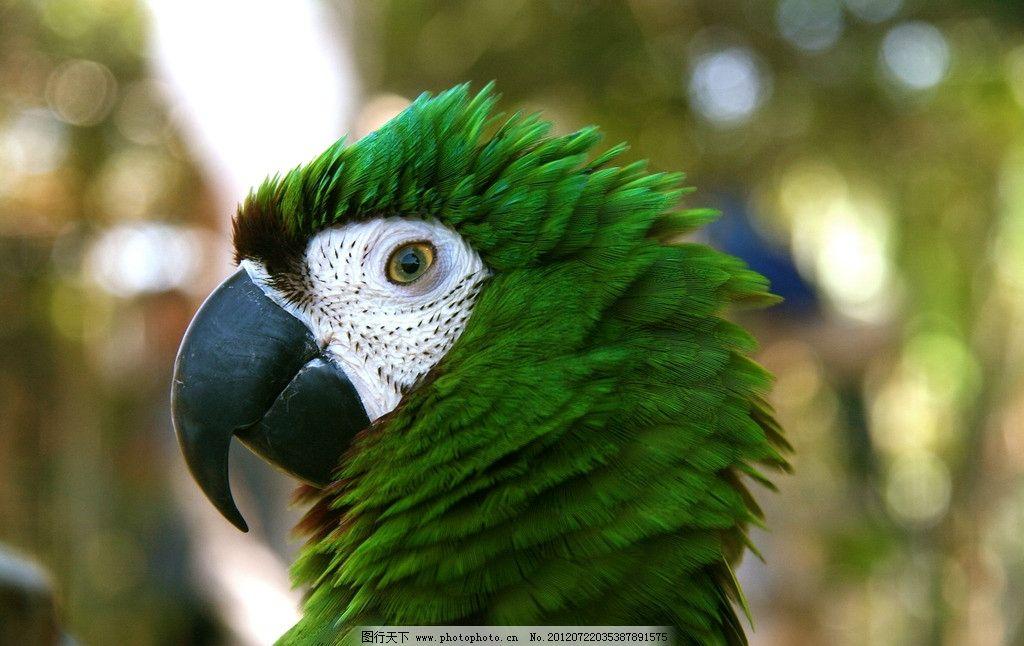 金刚鹦鹉 鹦鹉 鸟类 珍稀动物 珍稀鸟类 保护动物 绿色 生物世界 摄影