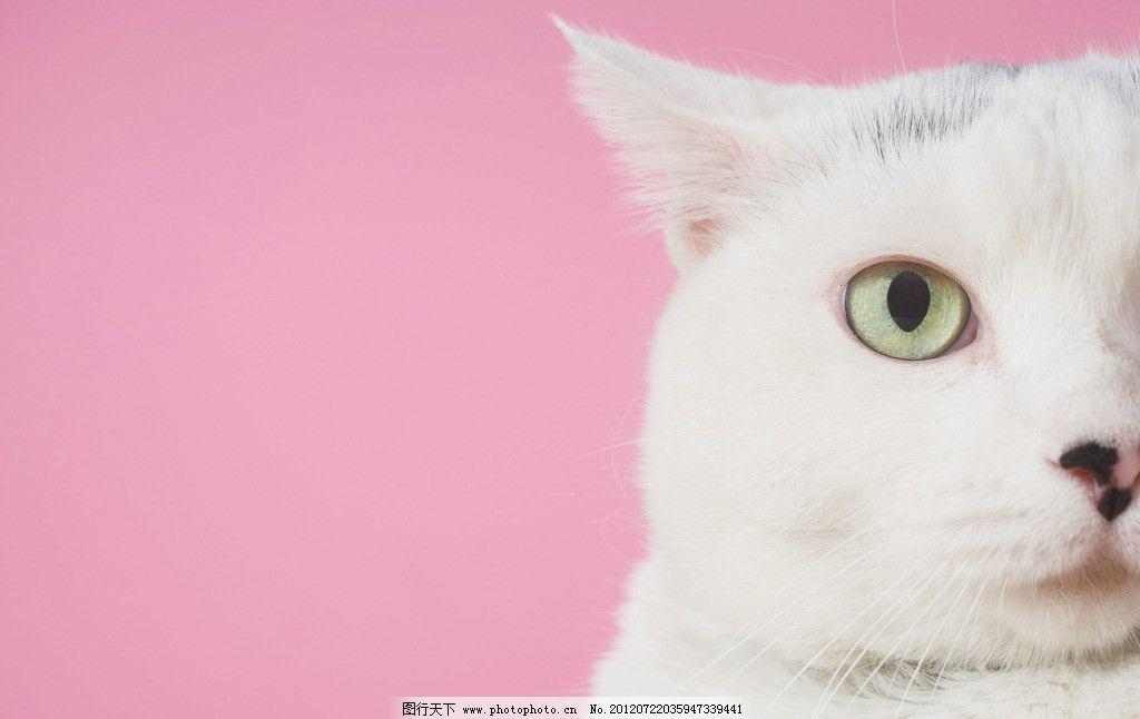 卡通可爱白猫图片