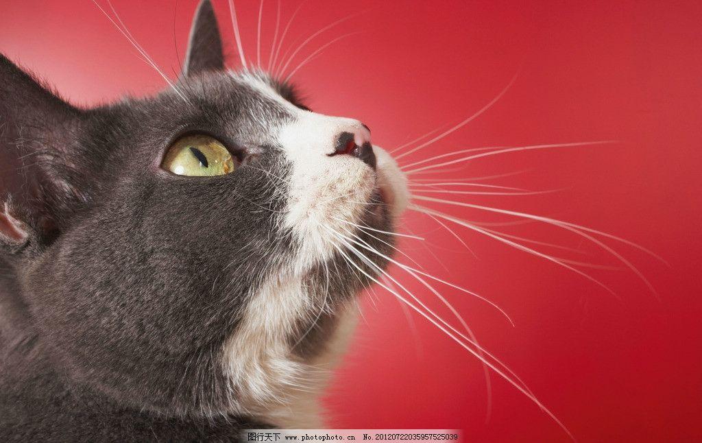 黑猫 绿眼睛 猫 黑猫特写 猫须 宠物猫 小猫 猫咪 懒猫 猫咪艺术照