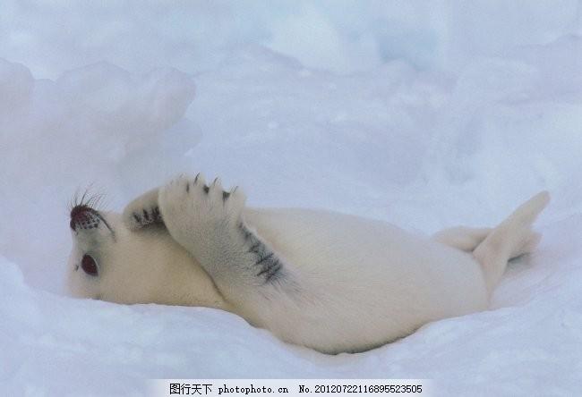 熊猫 动物世界