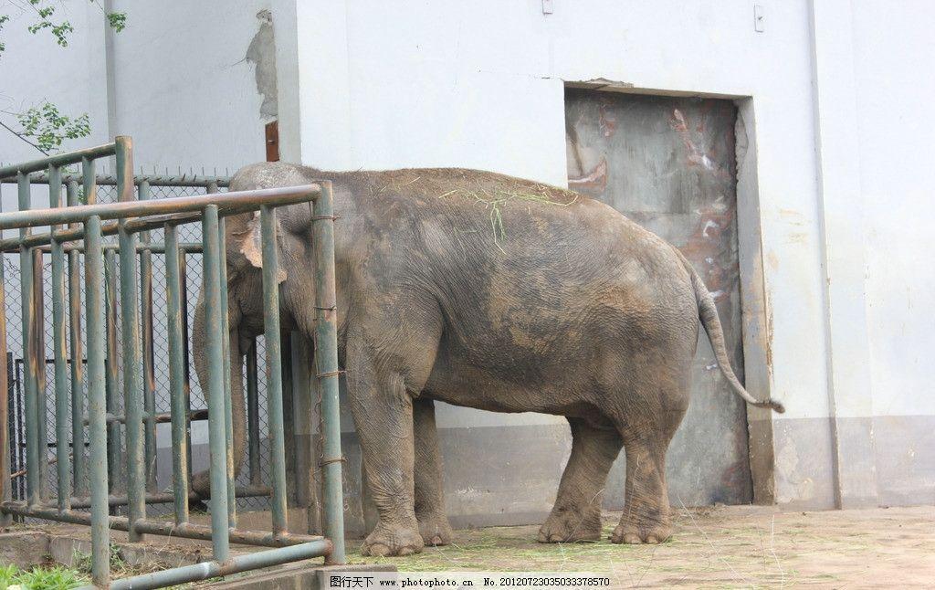 动物园 大象图片