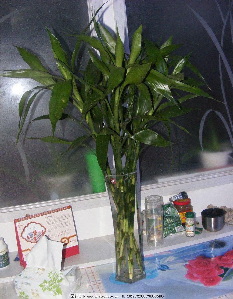 富贵竹 竹子 观赏 台历 纸抽 花瓶 玻璃花瓶 桌子 杯子 花草 生物世界