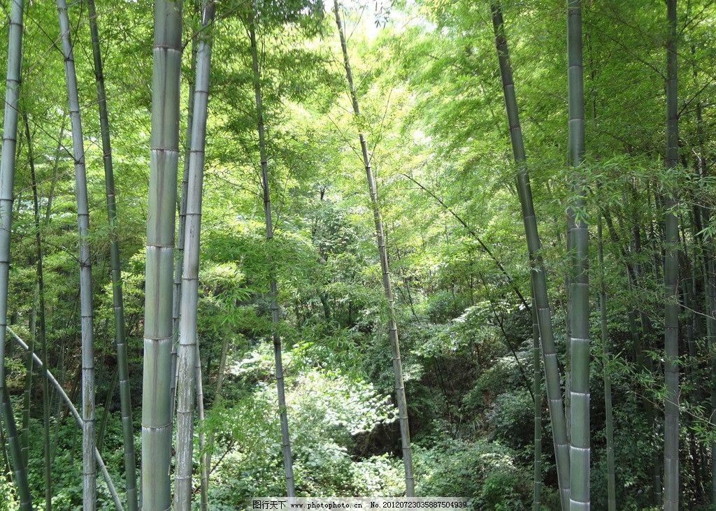 壁纸 风景 森林 植物 桌面 1024_731