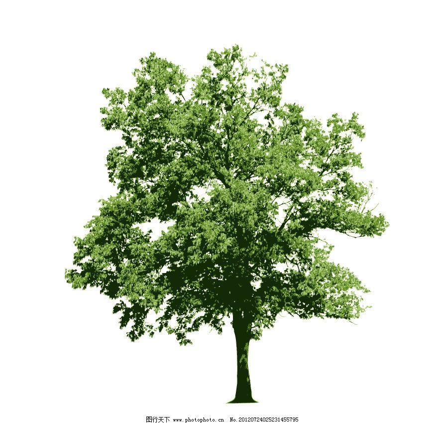 园林树木绿树图片