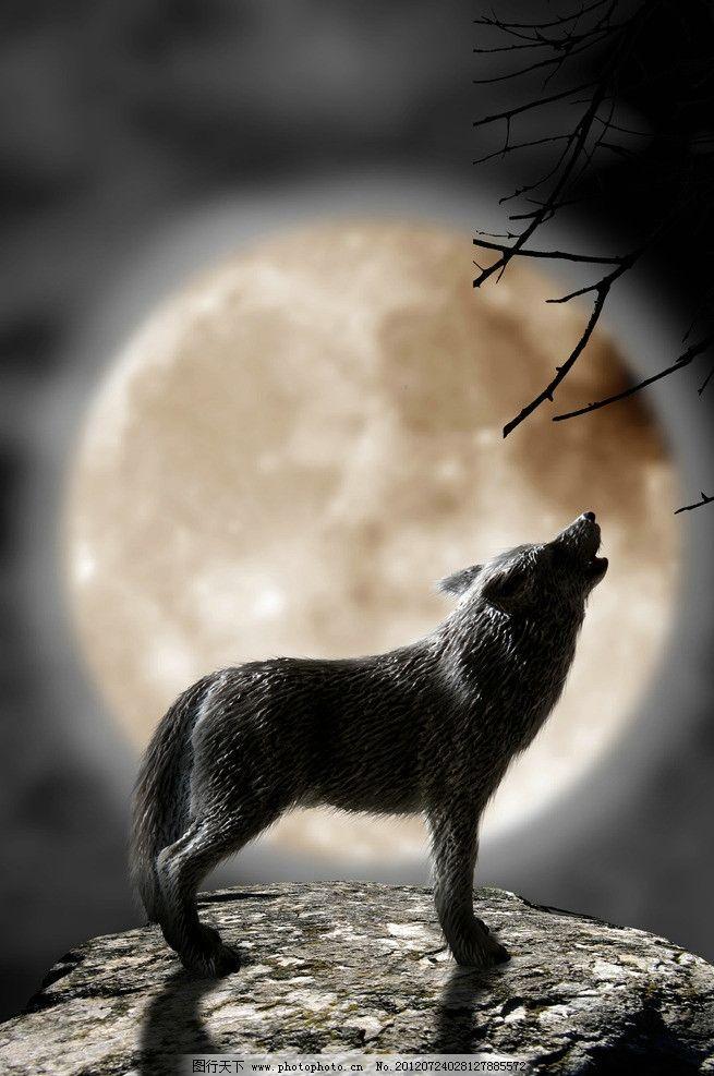 夜晚 仰天长啸 狼 皎洁 月亮 圆月 月光 狼人 狼叫 狼嚎 星空 树枝